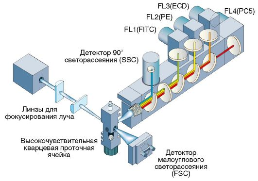 Рис. 3.7. Схема культуры клеток in vivo