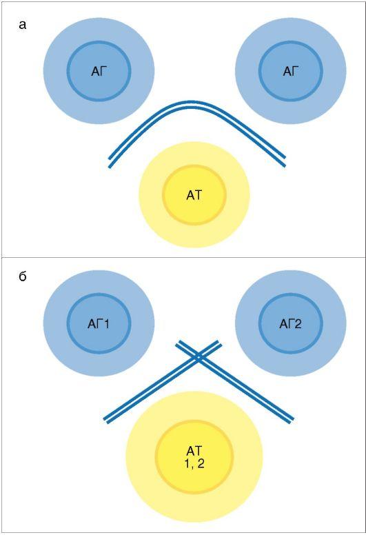 Рис. 2.3. Выделение нейтрофилов в двухступенчатом