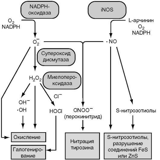 Схема выработки бактерицидных