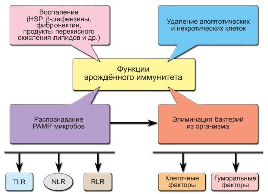 белок теплового шока хламидий лечение