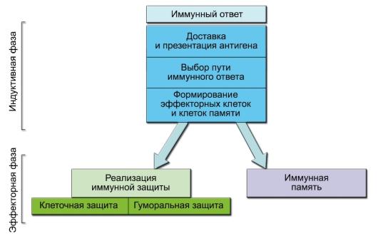 события иммунного ответа