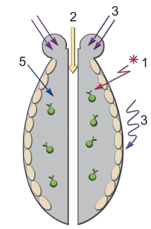 Многоклеточному организму