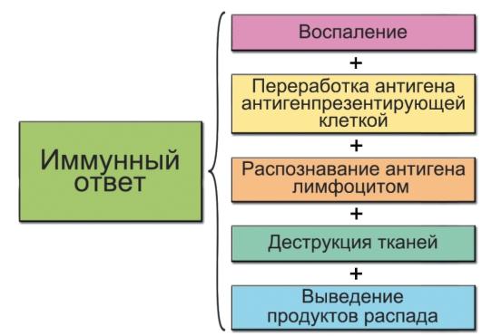 Схема основных этапов