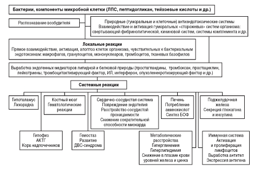 Схема развития интоксикации