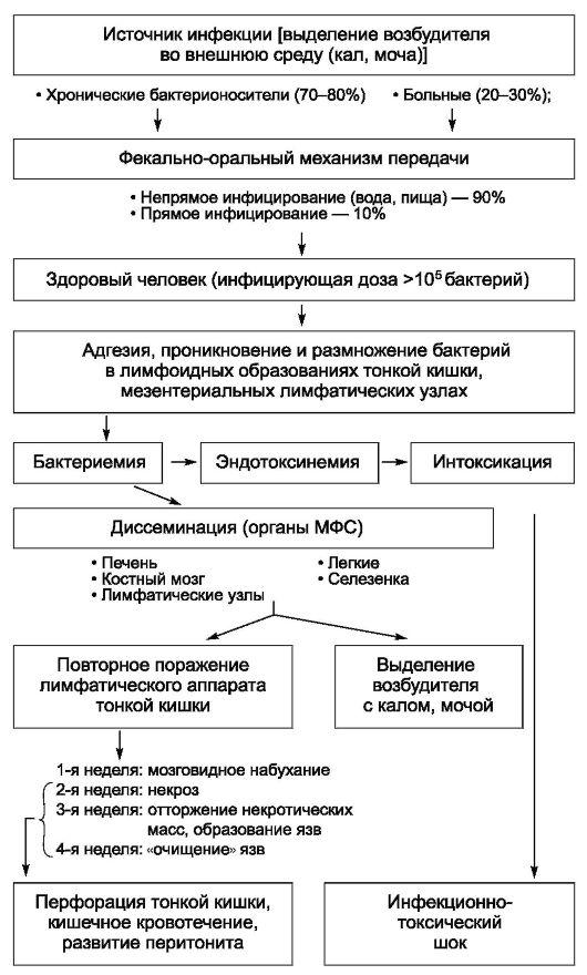 Тиф Кустарниковый