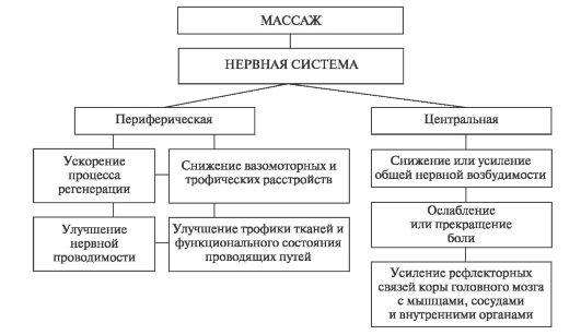 Схема 3.1. Влияние массажа на