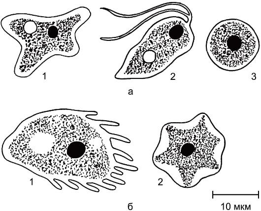паразиты внутри организма человека