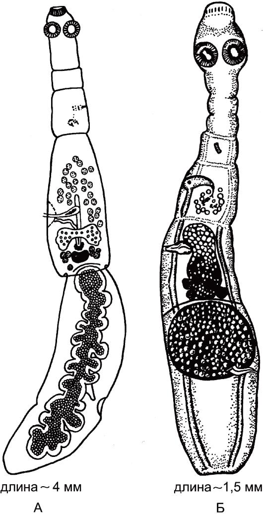 лук от паразитов в организме