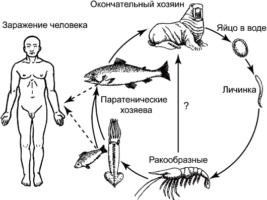 паразиты в тканях человека