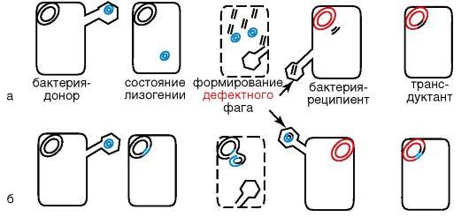 Схема трансдукции: а