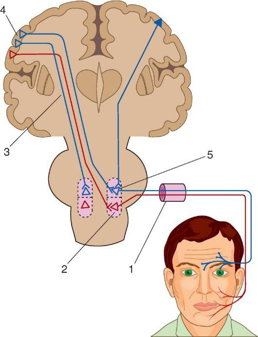 Нерв отводящий