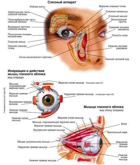 аппарата глазного яблока