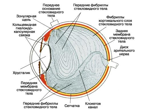 диска зрительного нерва.
