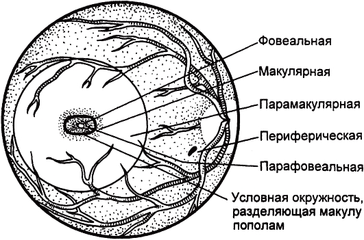 Зрение левый минус правый плюс