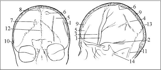 повреждения черепа (схема
