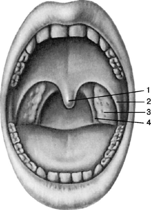 Ротоглотка