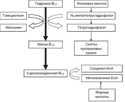 Схема биохимических реакций