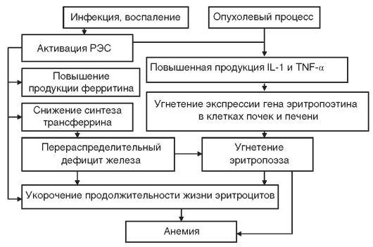 Схема патогенеза анемии
