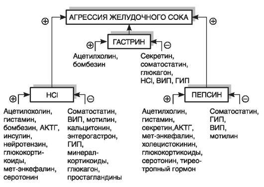 АКТГ - адренокортикотропный