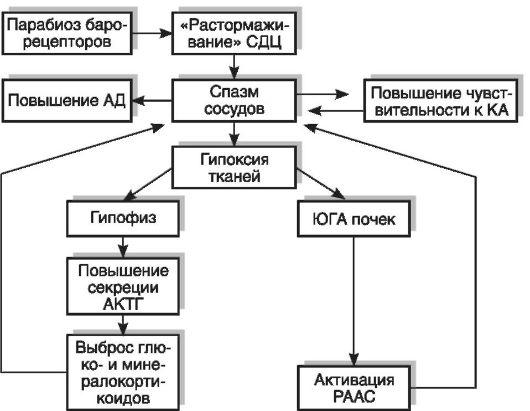 «Порочные круги» в патогенезе