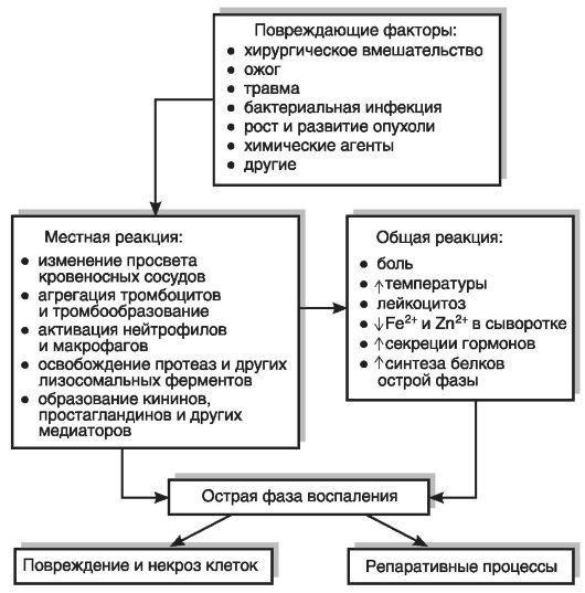 Гомотоксикология.