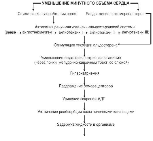 ГЛАВА 12 ПАТОФИЗИОЛОГИЯ