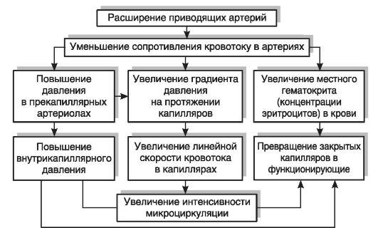 ГЛАВА 9 ПАТОФИЗИОЛОГИЯ ПЕРИФЕРИЧЕСКОГО (ОРГАННОГО) КРОВООБРАЩЕНИЯ ...