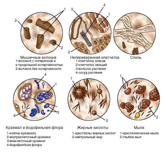 растительные препараты от паразитов широкого спектра