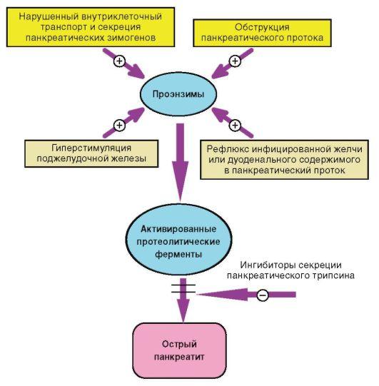 патогенез пищевой аллергии