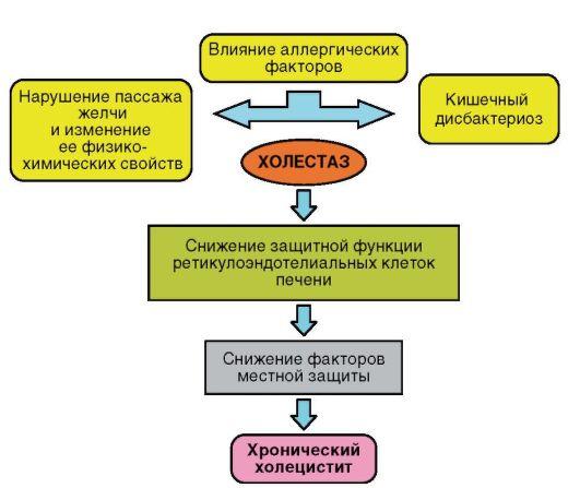 паразиты желчном пузыре человека симптомы