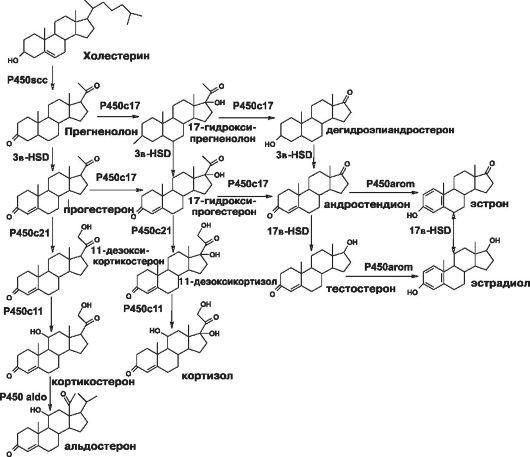 Схема стероидогенеза в яичниках