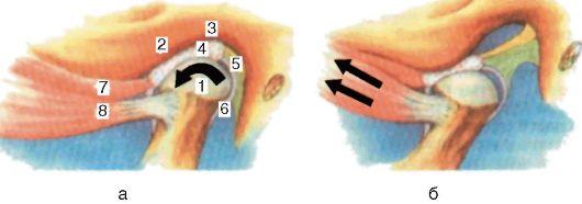 Реферат контрактура височно нижнечелюстного сустава какой стороной прикладывать лопух к суставу