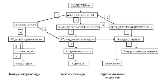 ЧАСТЬ VII.