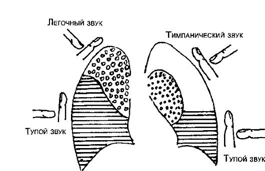 ГЛАВА 2 ИССЛЕДОВАНИЕ ОРГАНОВ